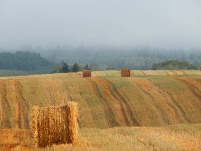Summer view of the hills near Carberry, MB.